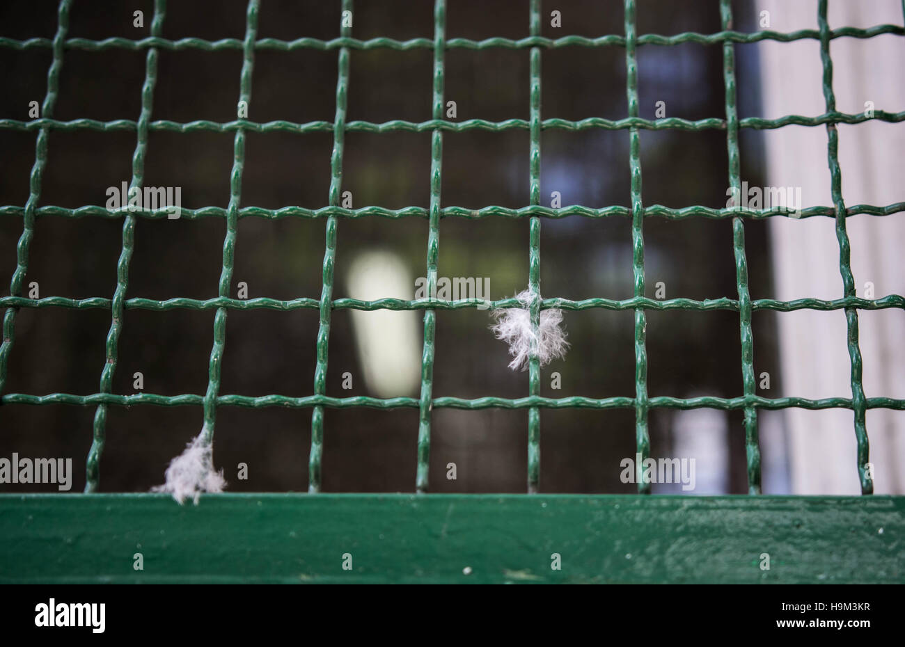 Fluff caught in a green metal grid - Stock Image