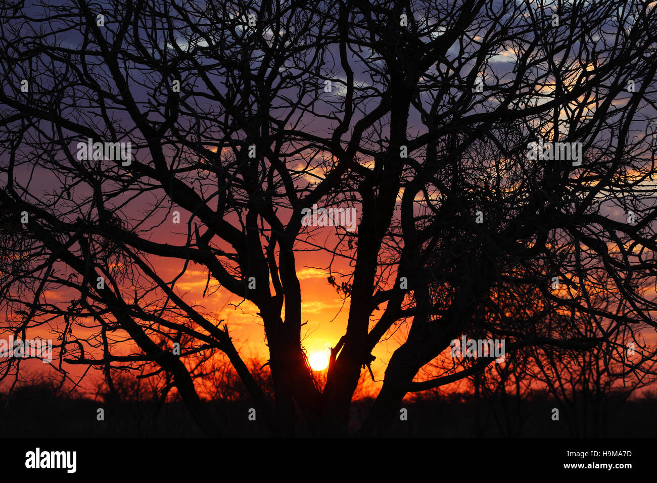 Silhouete of a tree at sunrise in Etosha Park, Namibia - Stock Image