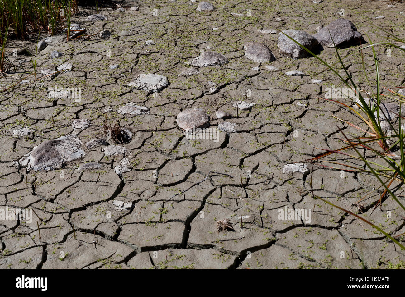 Val Veny Valle d'Aosta ground arid rocks drought climatic - Stock Image