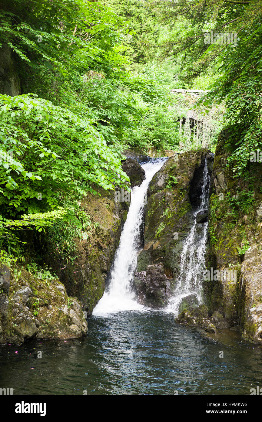 Woodland waterfall in Rydal Hall gardens in Cumbria UK - Stock Image