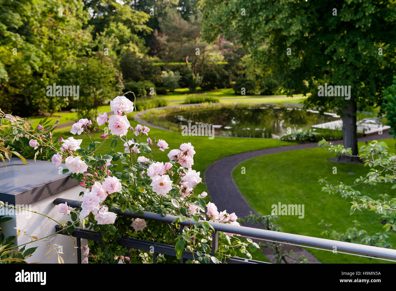 Flowering rose on railings in grounds of German home - Stock Image