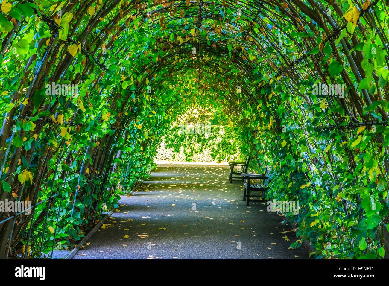 Vine tunnel stock photos vine tunnel stock images alamy for Kensington park