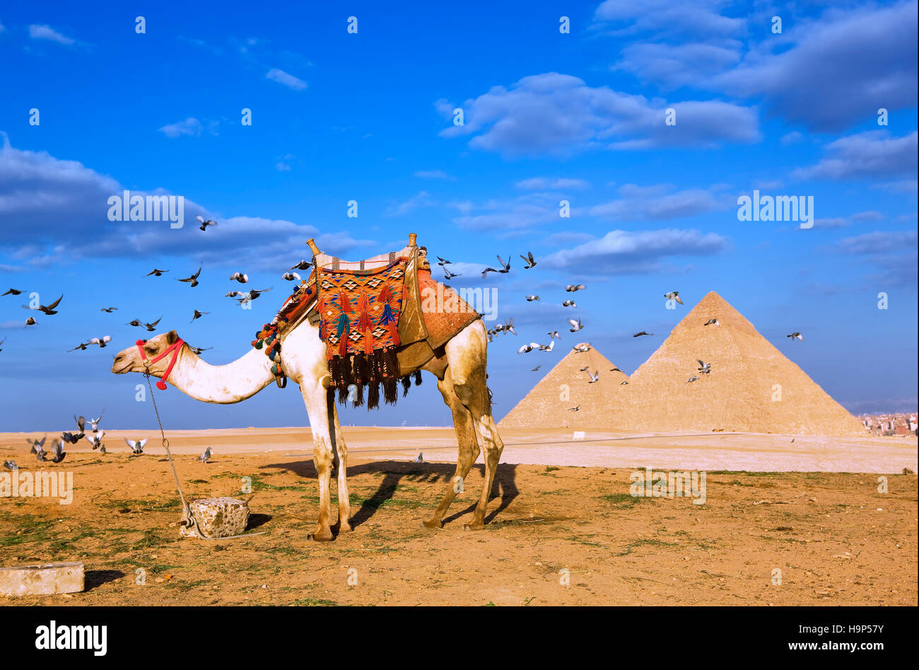 Pyramids of Giza, Cairo, Egypt - Stock Image