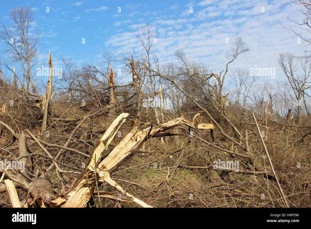 A wooded area decimated by a tornado in Illinois - Stock Image