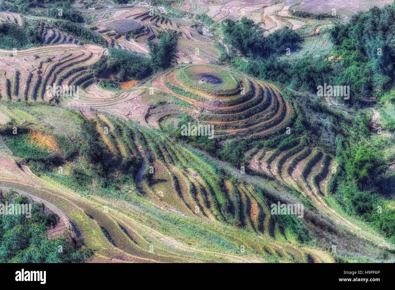 Rice terraces, Lao Cai, Sapa, Vietnam, Asia - Stock Image