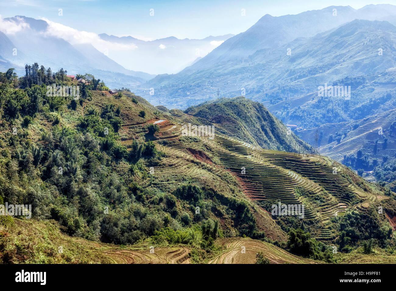 Rice terraces, Lao Chai, Sapa, Vietnam, Asia - Stock Image