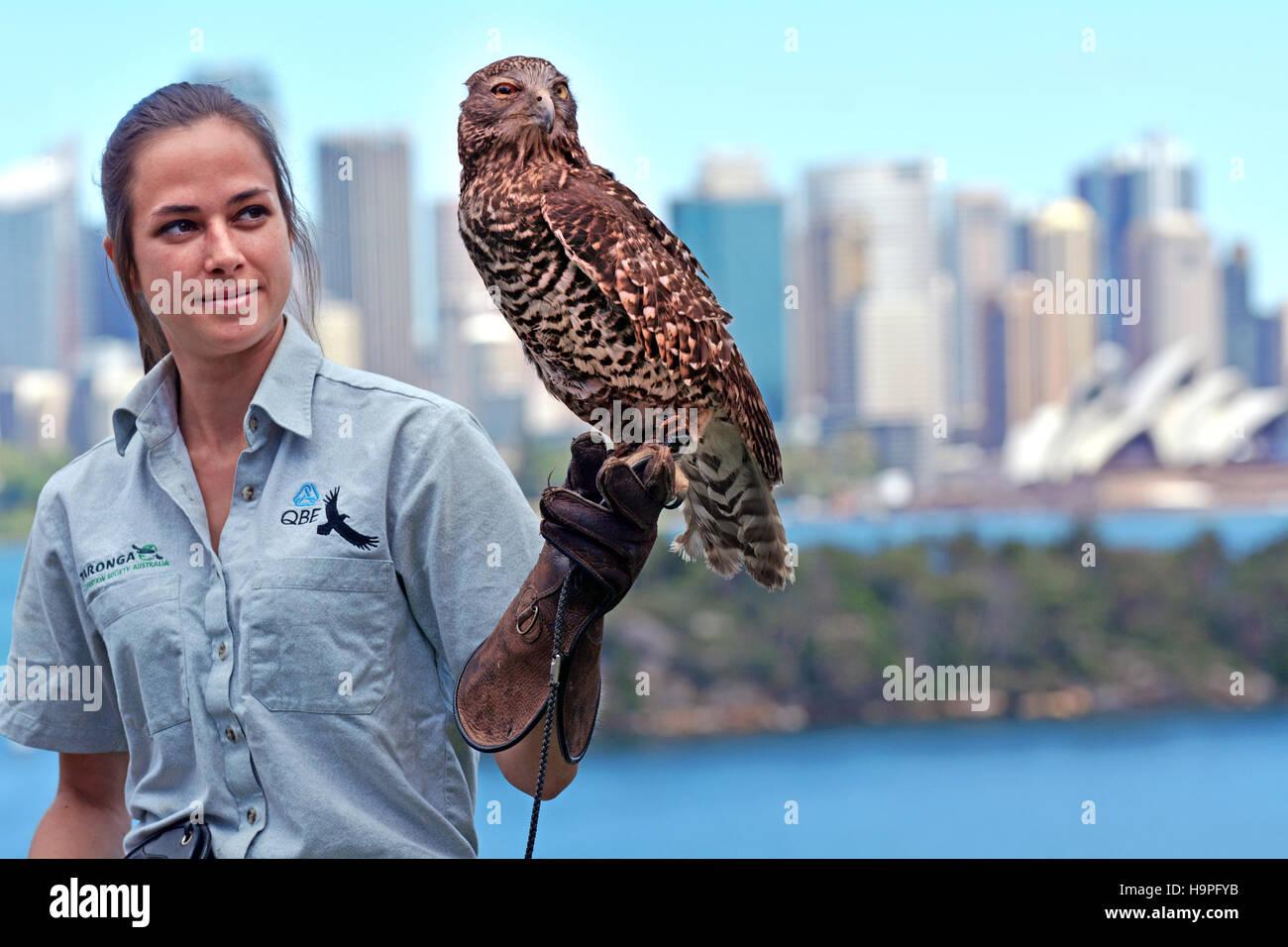 Falconry in australia