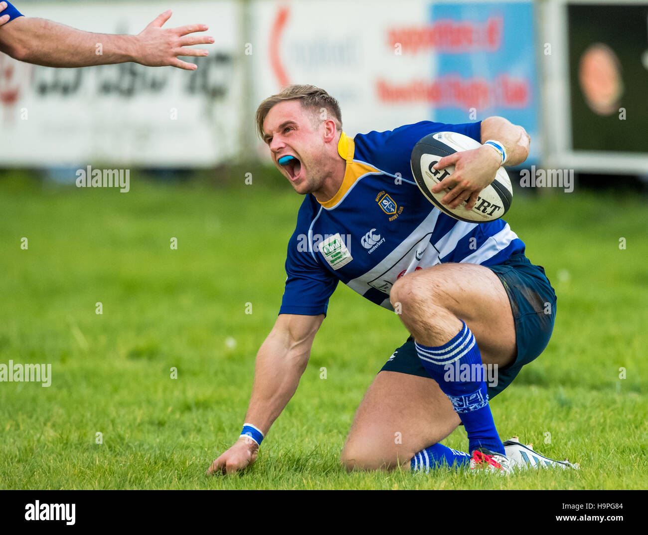 Rugby player ecstatic after scoring with a touch. - Stock Image