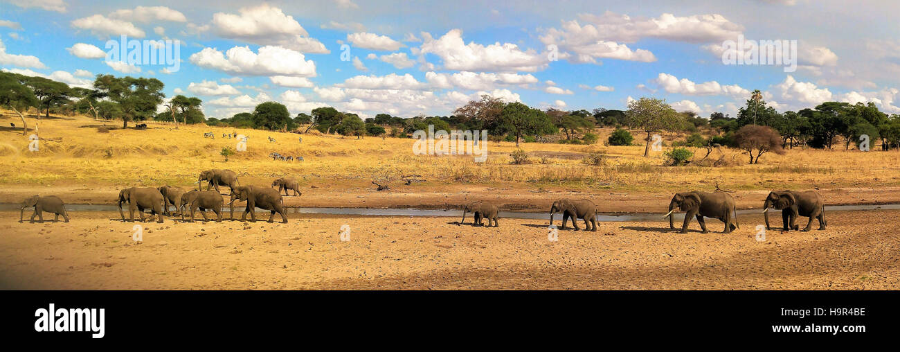 Elephant herd roaming across Serengeti plain. - Stock Image
