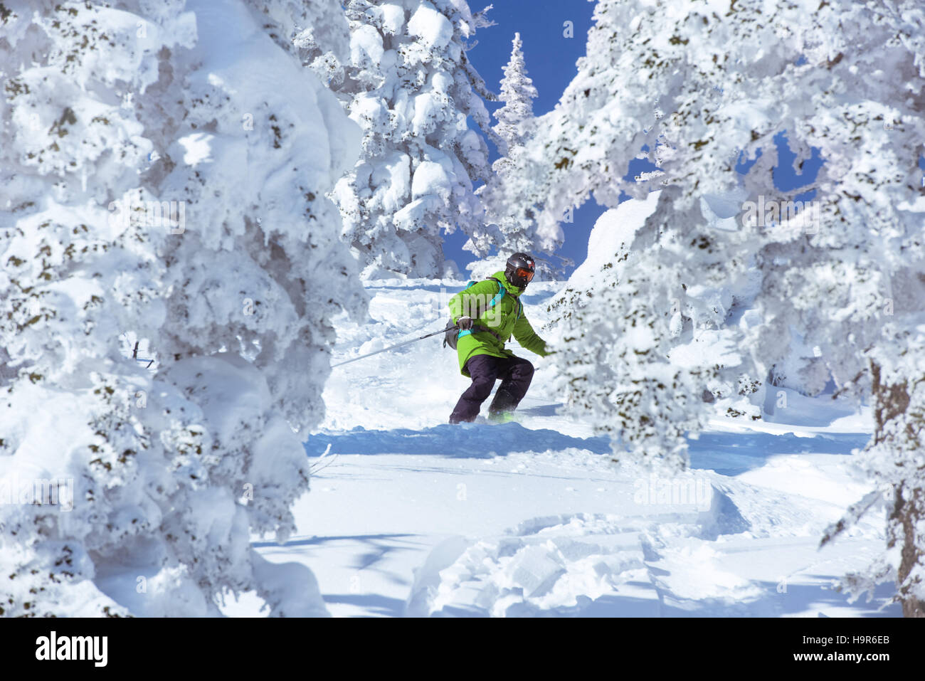 Skiers freeride forest downhill skiing - Stock Image