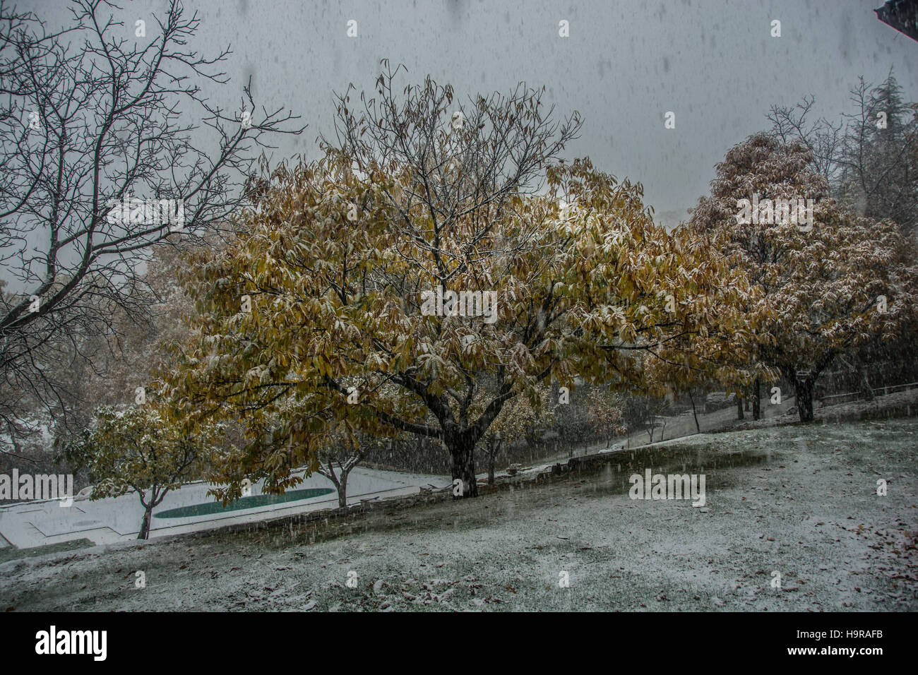 Cercedilla, Madrid, Spain. 24th Nov, 2016. Spain Weather; Snow begins to fall in Spain. In the picture is the town Stock Photo