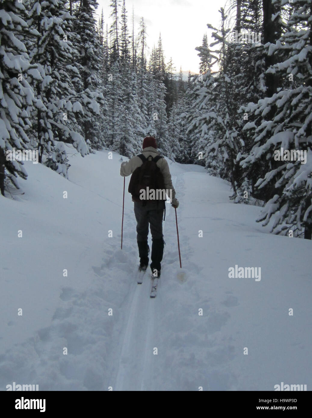 An outdoors enthusiast cross-country skiing near Cameron Pass - Stock Image