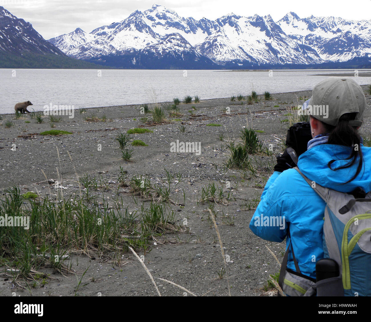 lakeclarknps 25284382815 Beach at the Western Bear Viewing Area - Stock Image