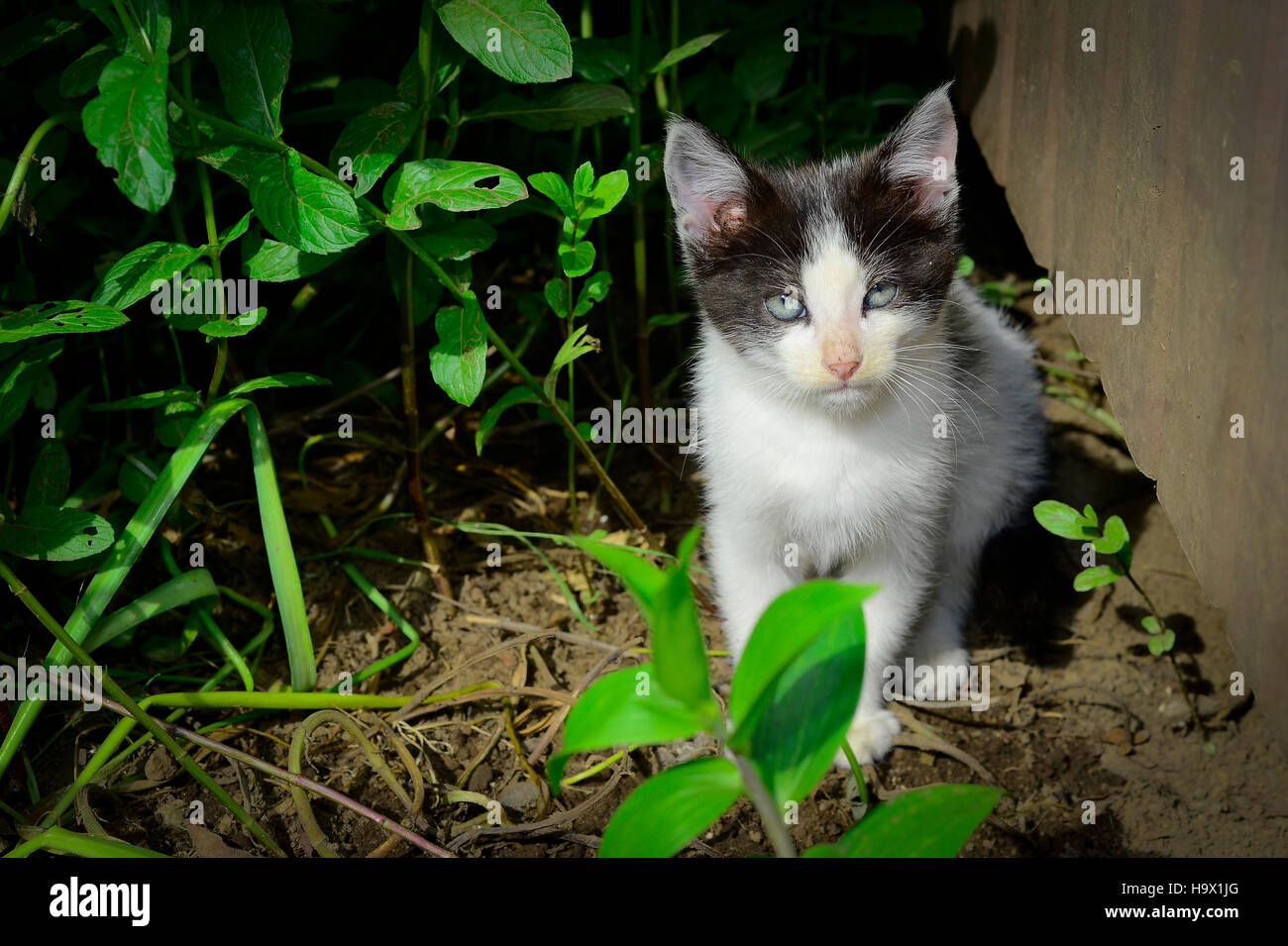Small cats - Stock Image