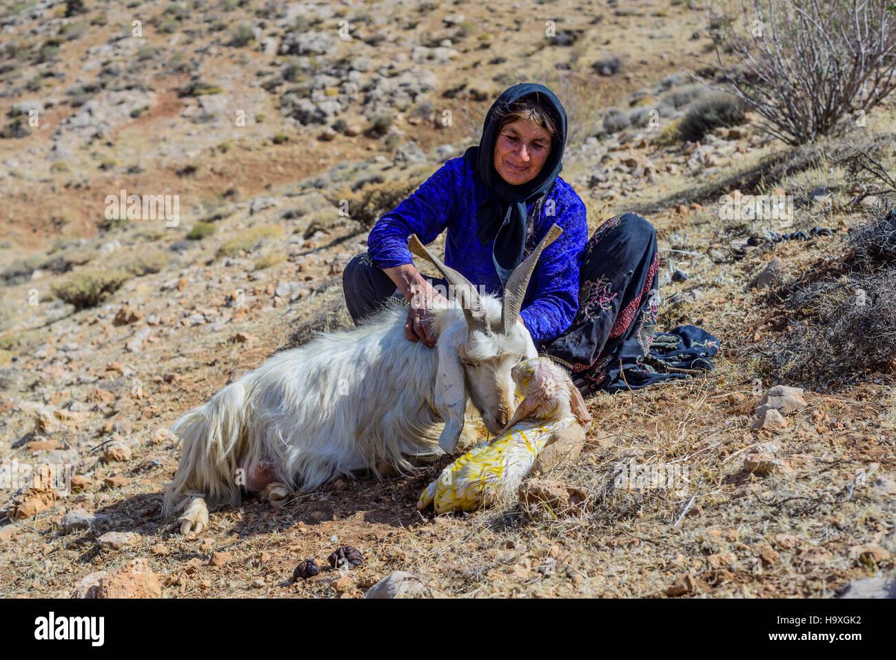 Qashqai nomads - Stock Image