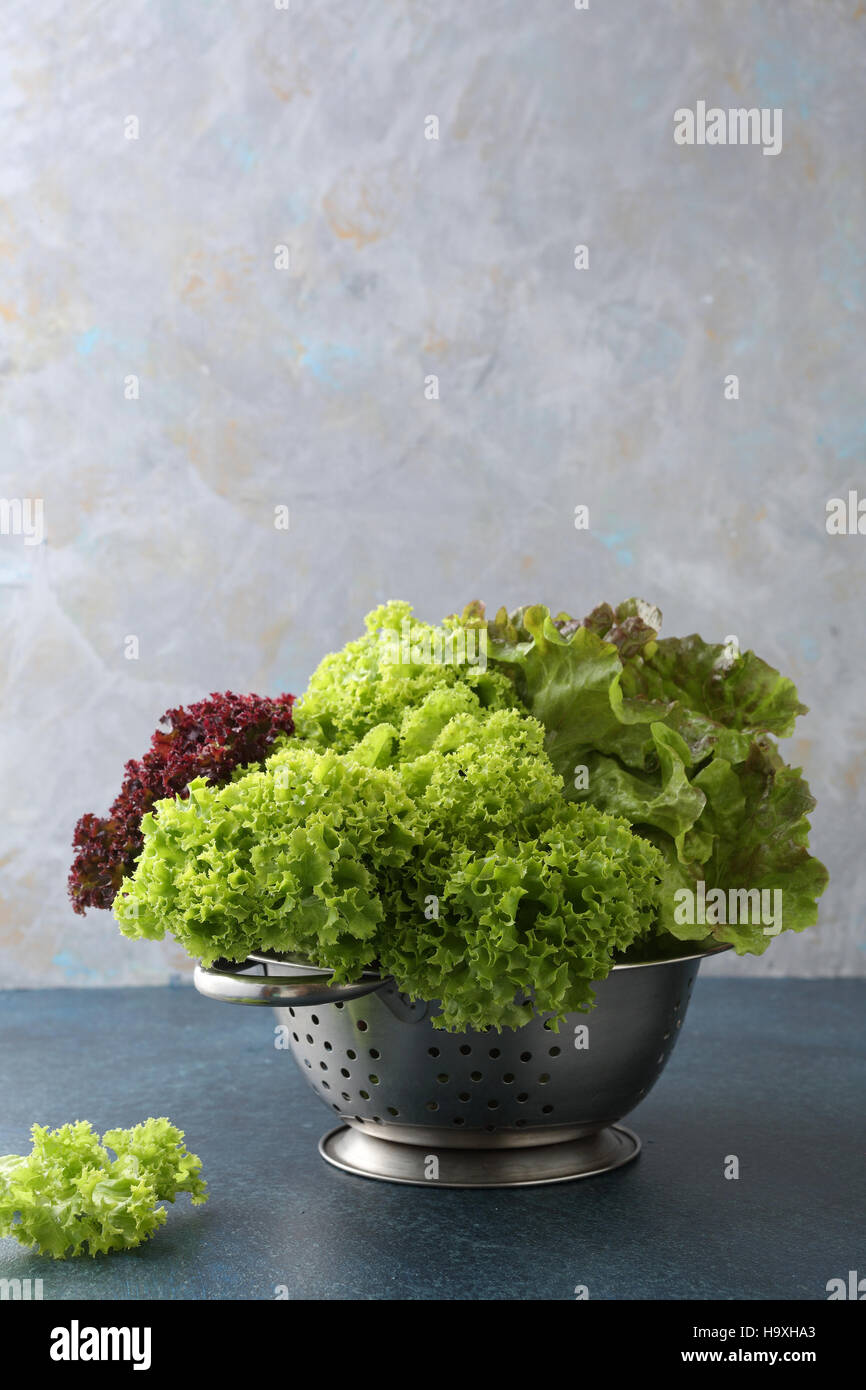 Fresh and green lettuce , food closeup - Stock Image