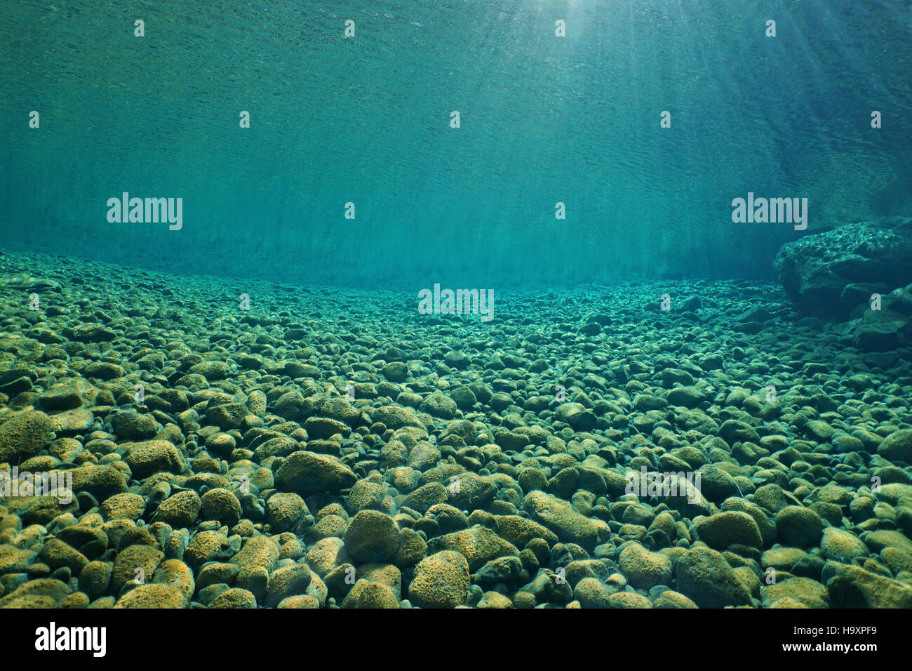 Pebbles underwater on riverbed with clear freshwater and sunlight through water surface natural scene Dumbea river - Stock Image