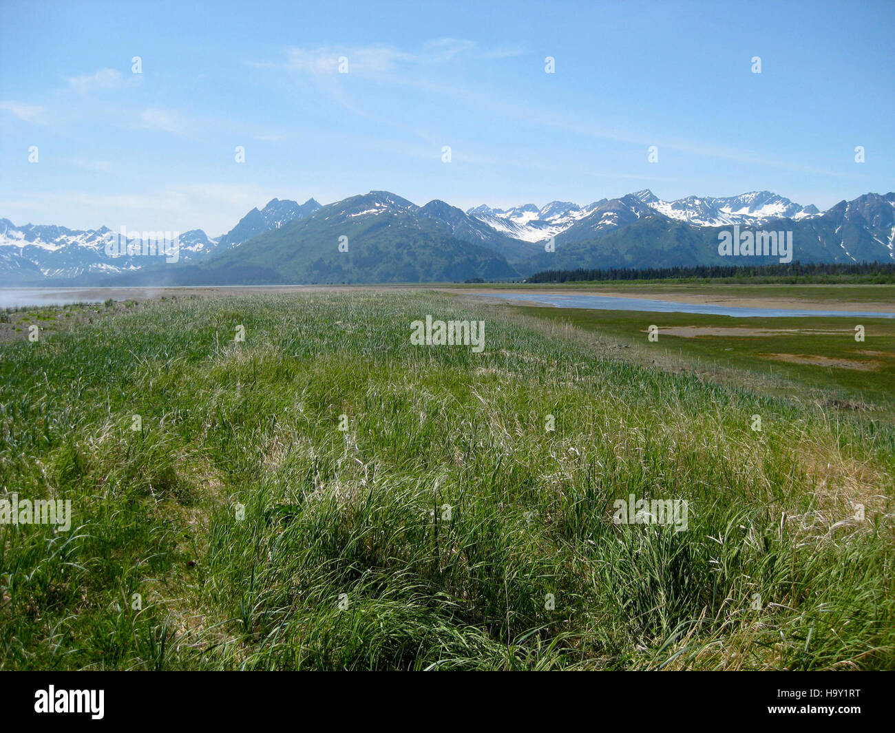 lakeclarknps 25258693306 Western Bear Viewing Area - Stock Image