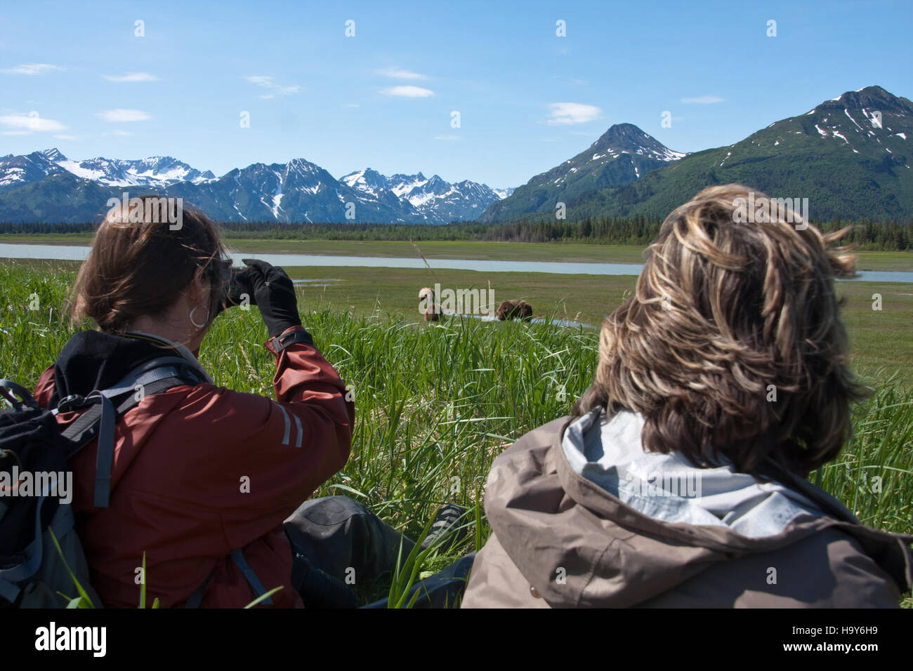 lakeclarknps 24988652690 Sedge Meadow at the Western Bear Viewing Area - Stock Image
