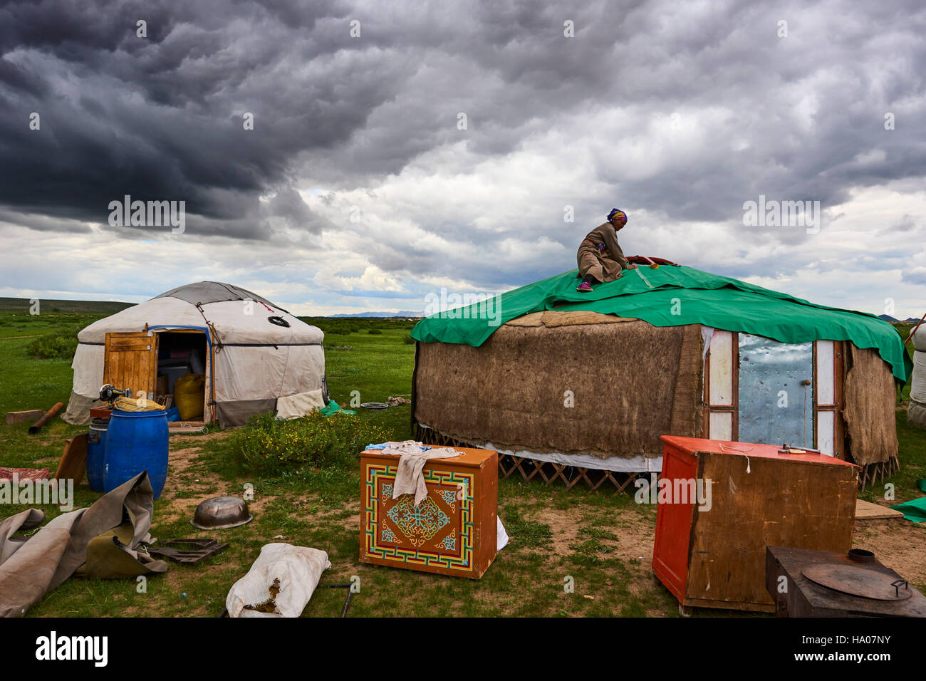 Mongolia, Ovorkhangai province, Orkhon valley, Nomad camp migration, construction of yurt - Stock Image