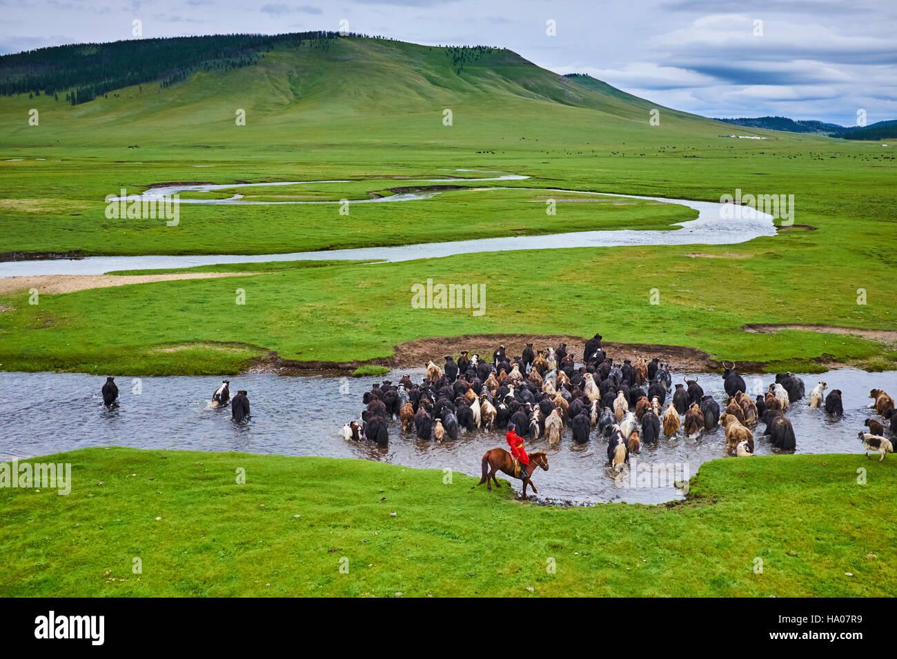 Mongolia, Arkhangai province,  Mongolian horserider with a herd of yaks Stock Photo