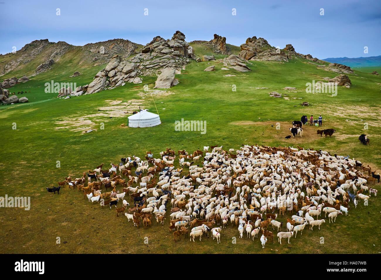 Mongolia, Bayankhongor province, nomad camp - Stock Image