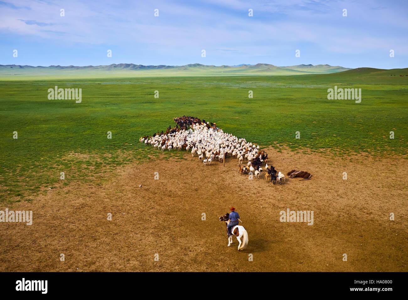 Mongolia, Arkhangai province, nomad camp, sheep herd - Stock Image