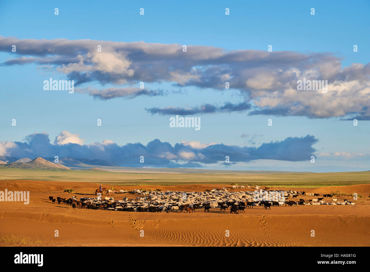 Mongolia, Zavkhan province, sheep herd in the deserted landscape of sand dunes in the steppe - Stock Image