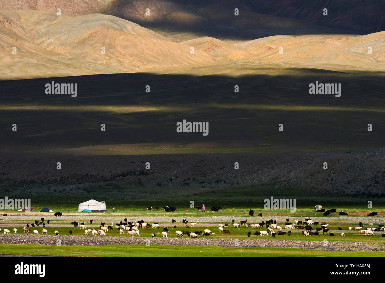 Mongolia, Bayan-Ulgii province, western Mongolia, the colored mountains of the Altay, nomad camp of the Kazakh people - Stock Image