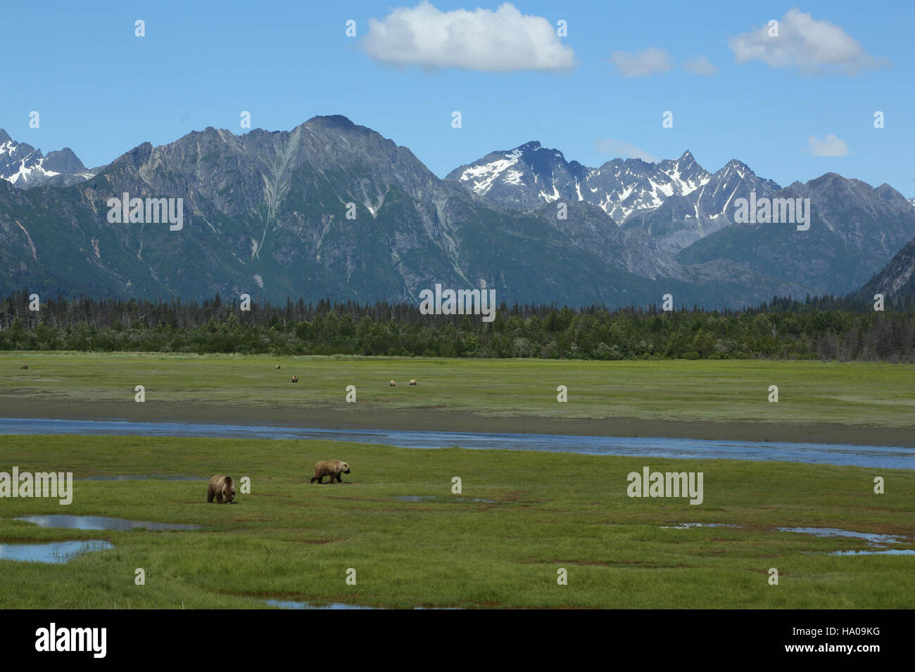 lakeclarknps 24916441379 How Many Bears Do You See¿ - Stock Image