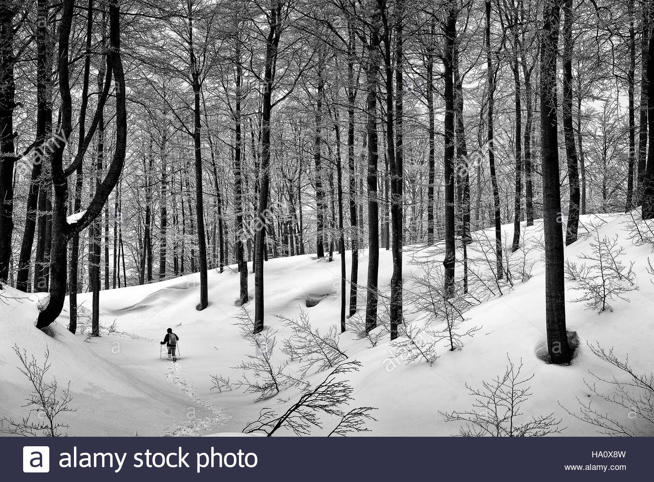 Woman hiker walking through the deep snow in a winter forest.  National park Risnjak in Croatia, Europe. - Stock Image