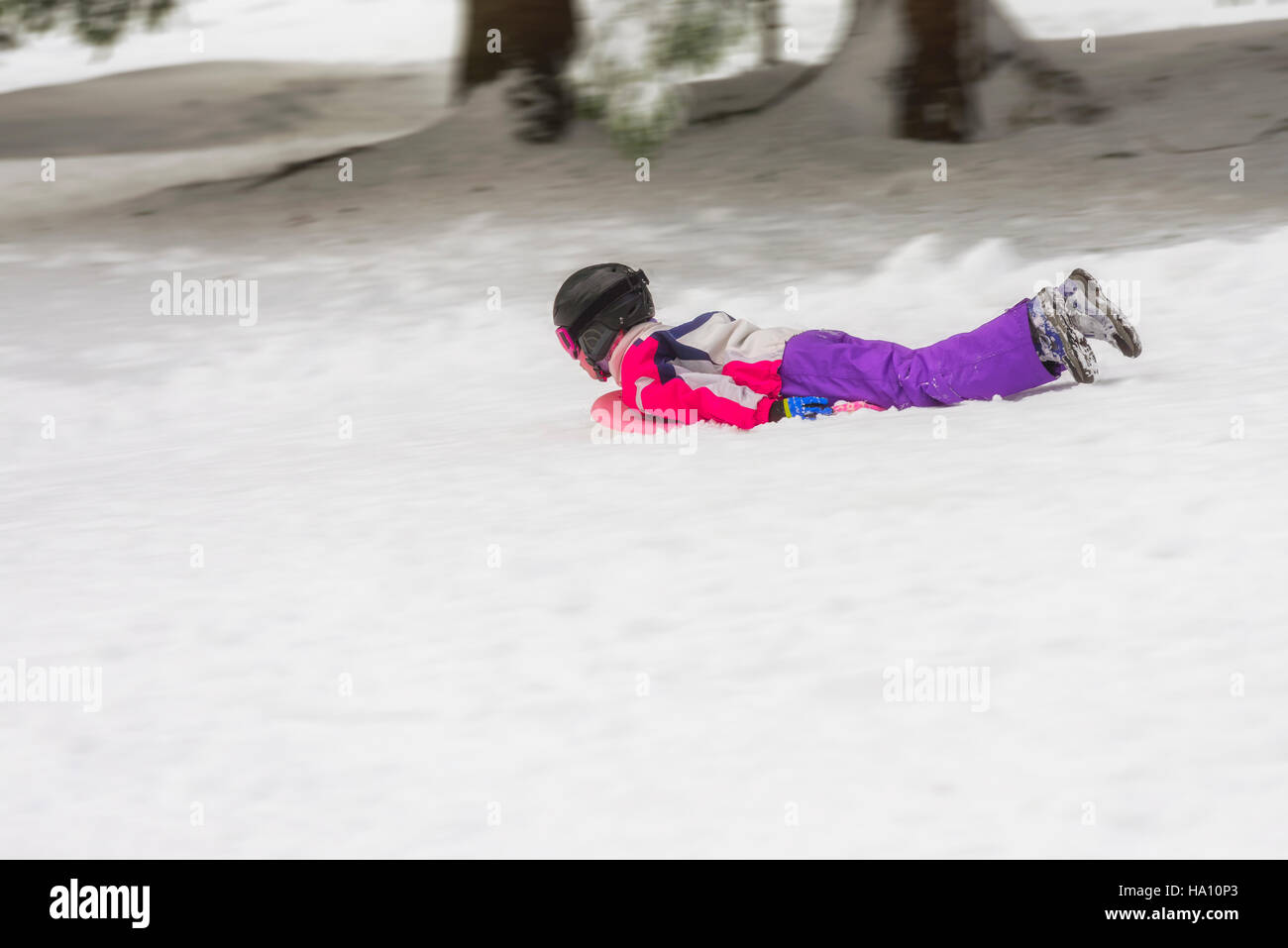 Young child (might be boy or girl) outdoors in winter with a toboggan carpet sled board speeding downhill, facing - Stock Image