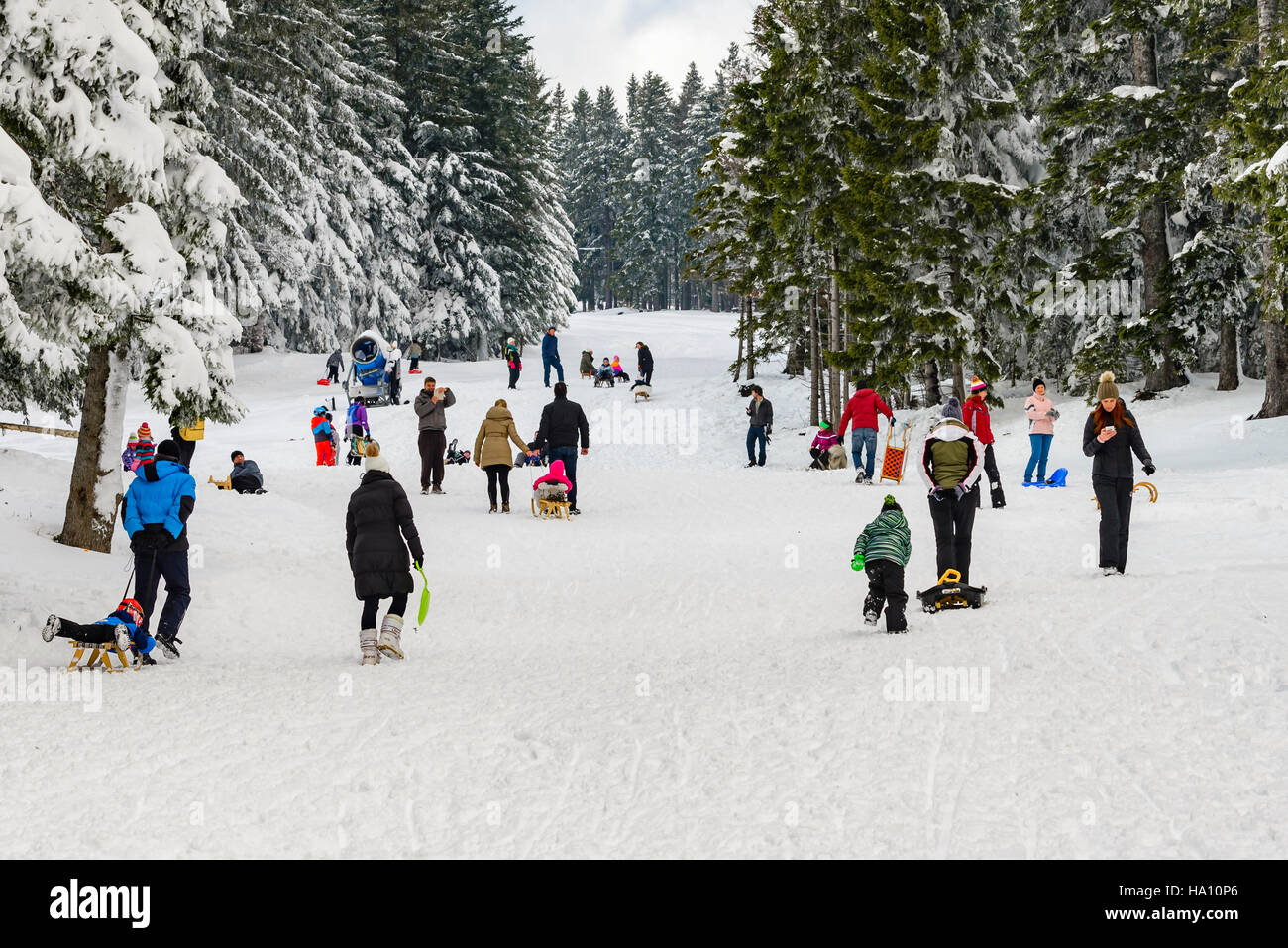 Pohorje, Slovenia - November 13, 2016: Children with parents sledding and having fun on first winter snow in the - Stock Image