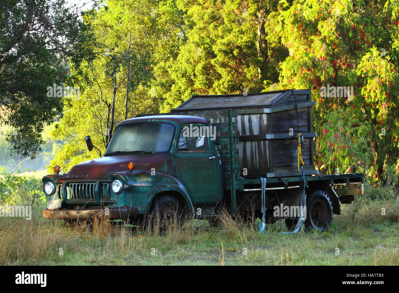 A rusty old green Bedford truck at rest in a field, in front of a thicket of trees. - Stock Image