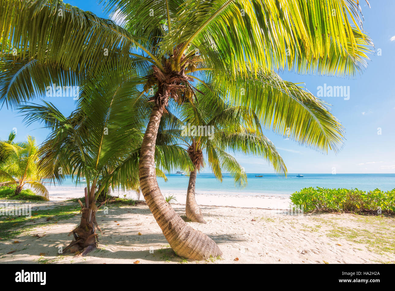Palm trees on a tropical beach. - Stock Image