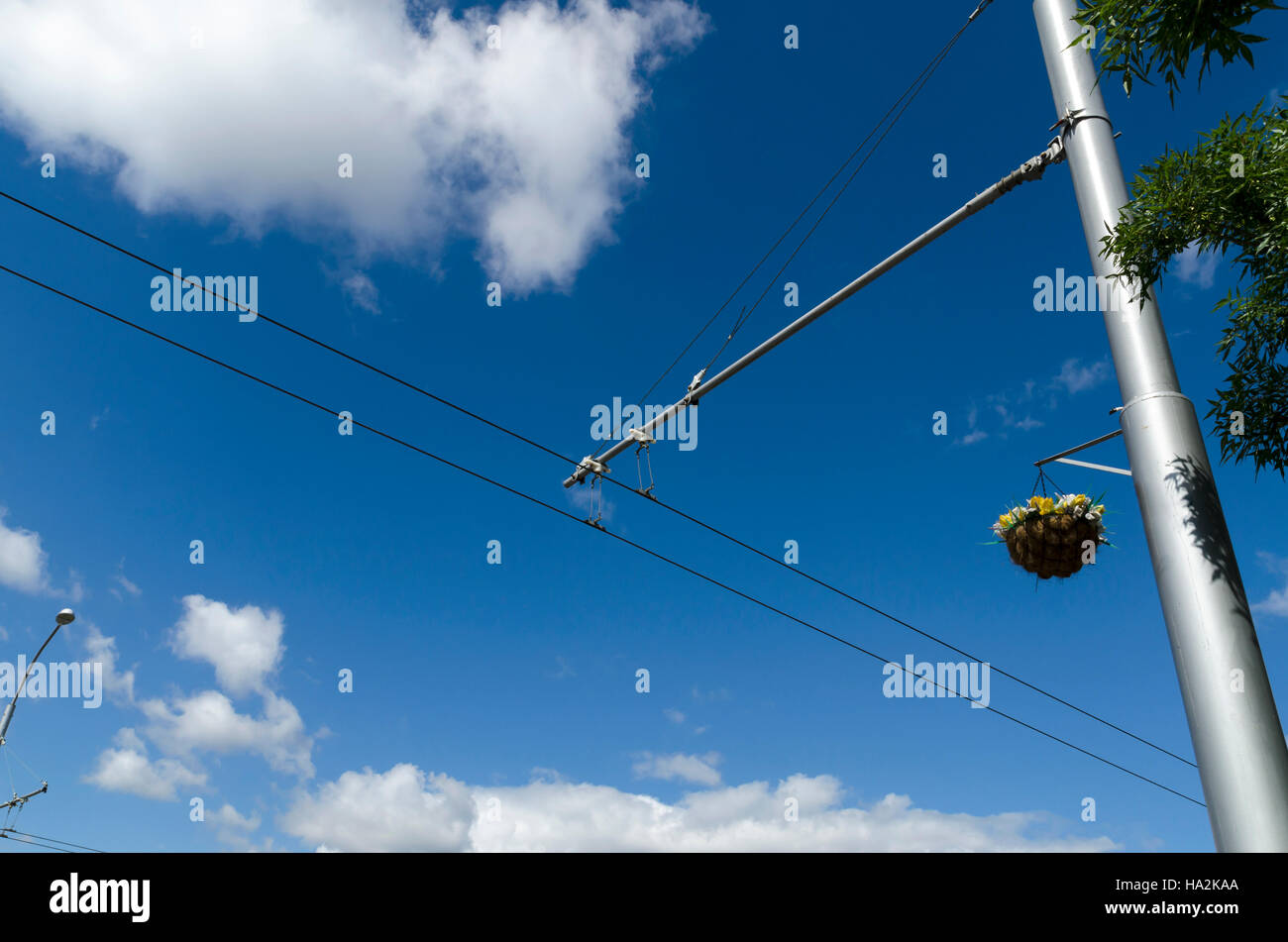 Basket with flowers decoration on a trolley wire pole Stock Photo ...
