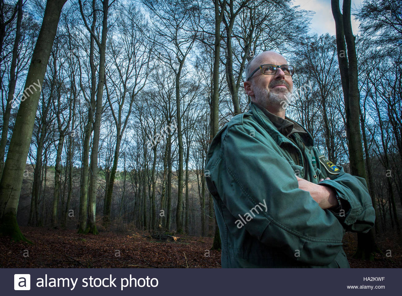 Author & Forester Peter Wohlleben in the 4000 year old beech forest he manages for the community of Hümmel, - Stock Image