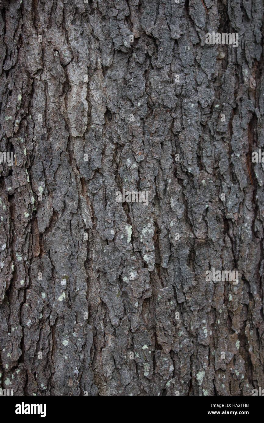 Cherry Tree Bark Stock Photos Amp Cherry Tree Bark Stock