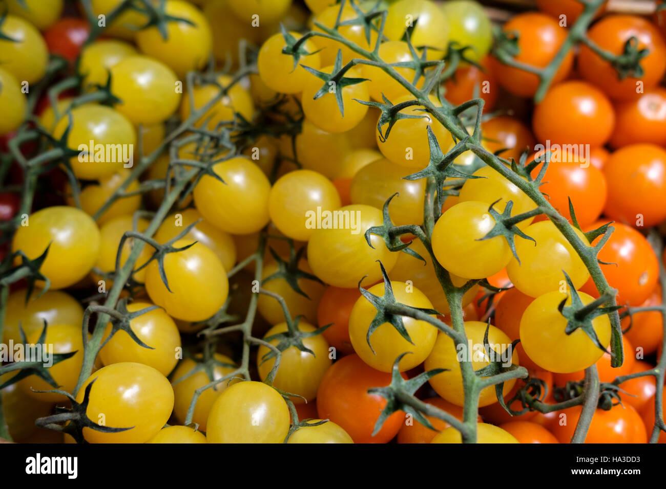 Baby tomatoes-Solanum lycopersicum - Stock Image