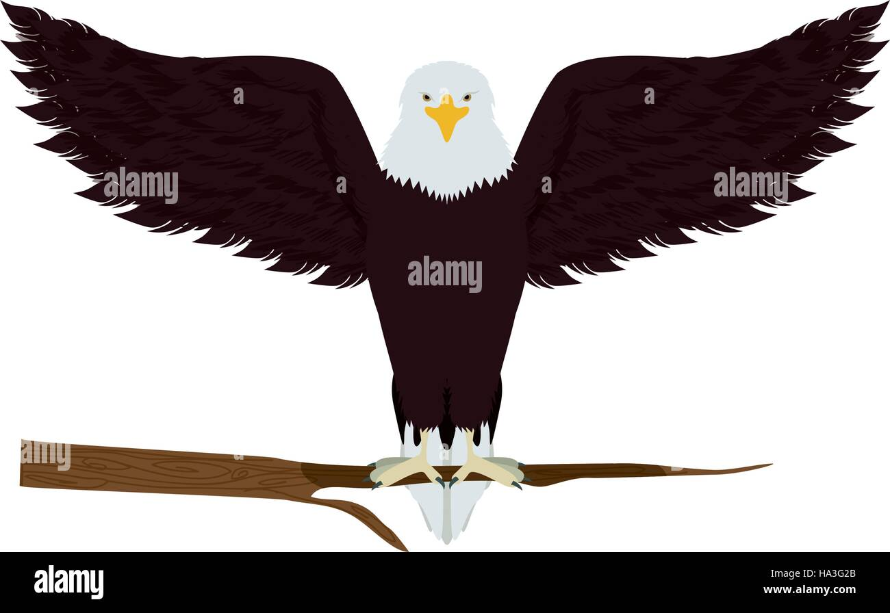 Dignity Vector Vectors Stock Photos Bald Eagle Diagram Golden Related Keywords Suggestions On A Tree Branch Illustration Image