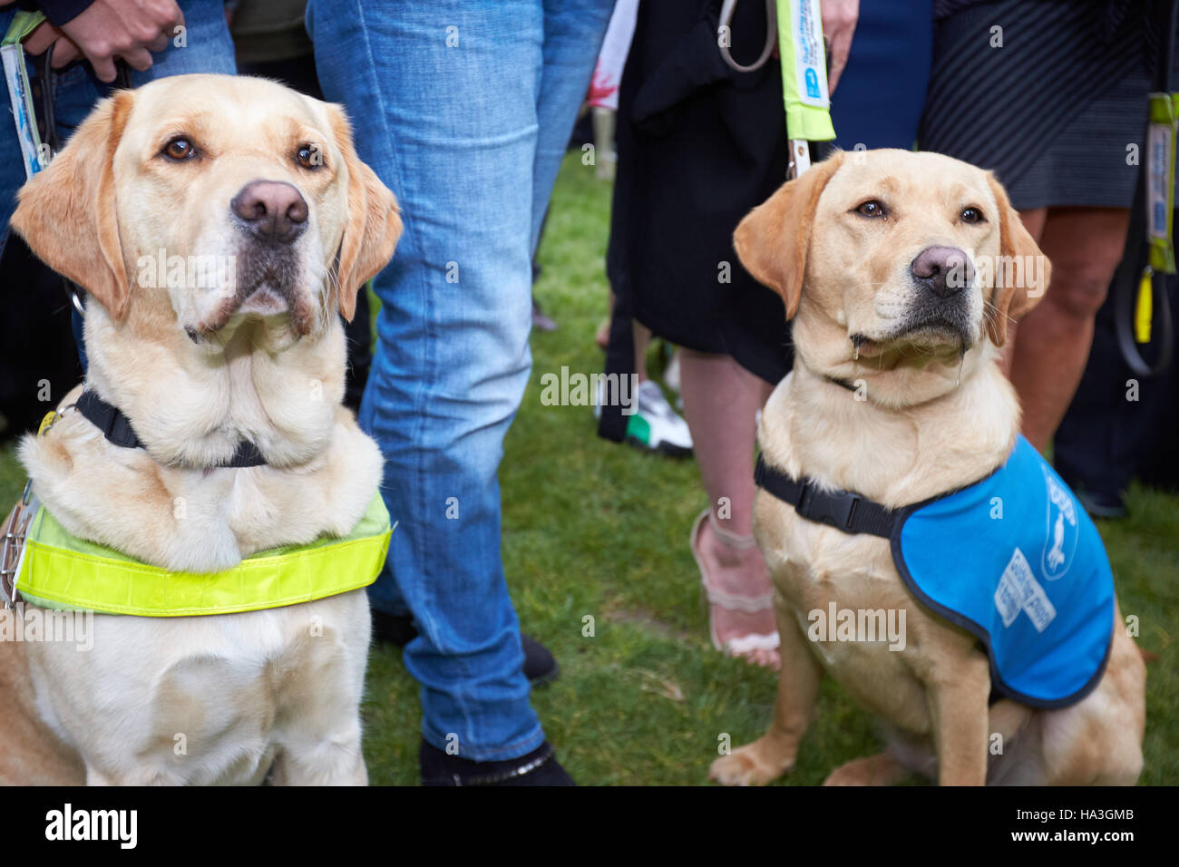 Photocall for Guide Dogs for the Blind next to the Houses of Parliament to highlight the difficulties faced by guide Stock Photo
