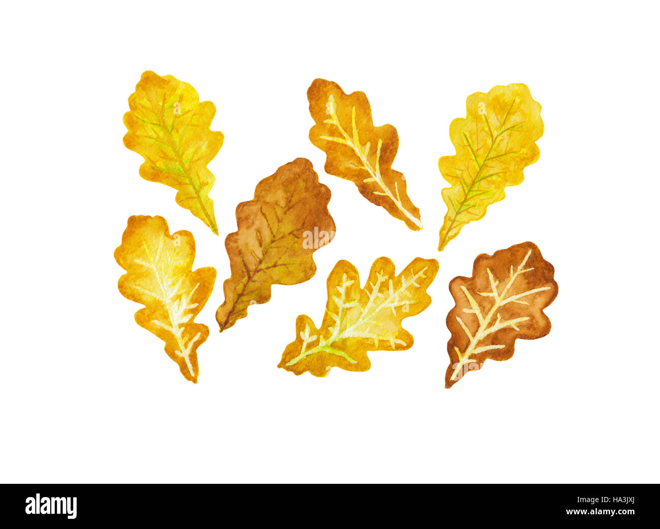 Seven fall colored oak leaves watercolor Stock Photo