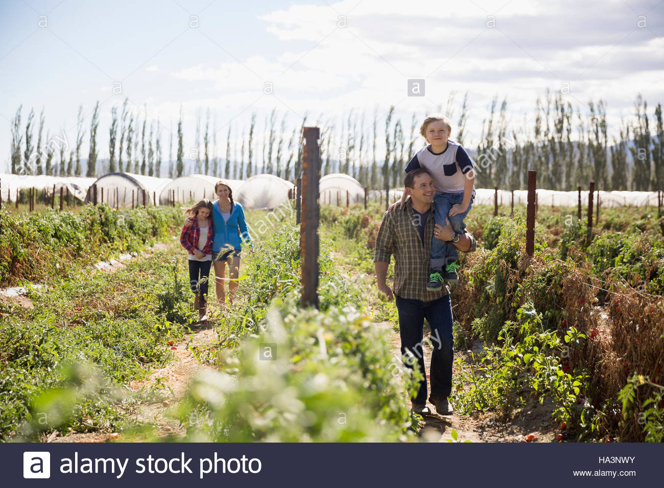 Family walking in sunny rural crop field - Stock Image