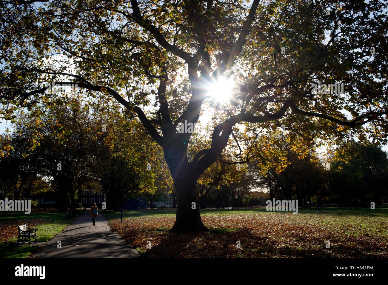 Hackney. London Fields. Sun bursting through tree with fallen leaves - Stock Image