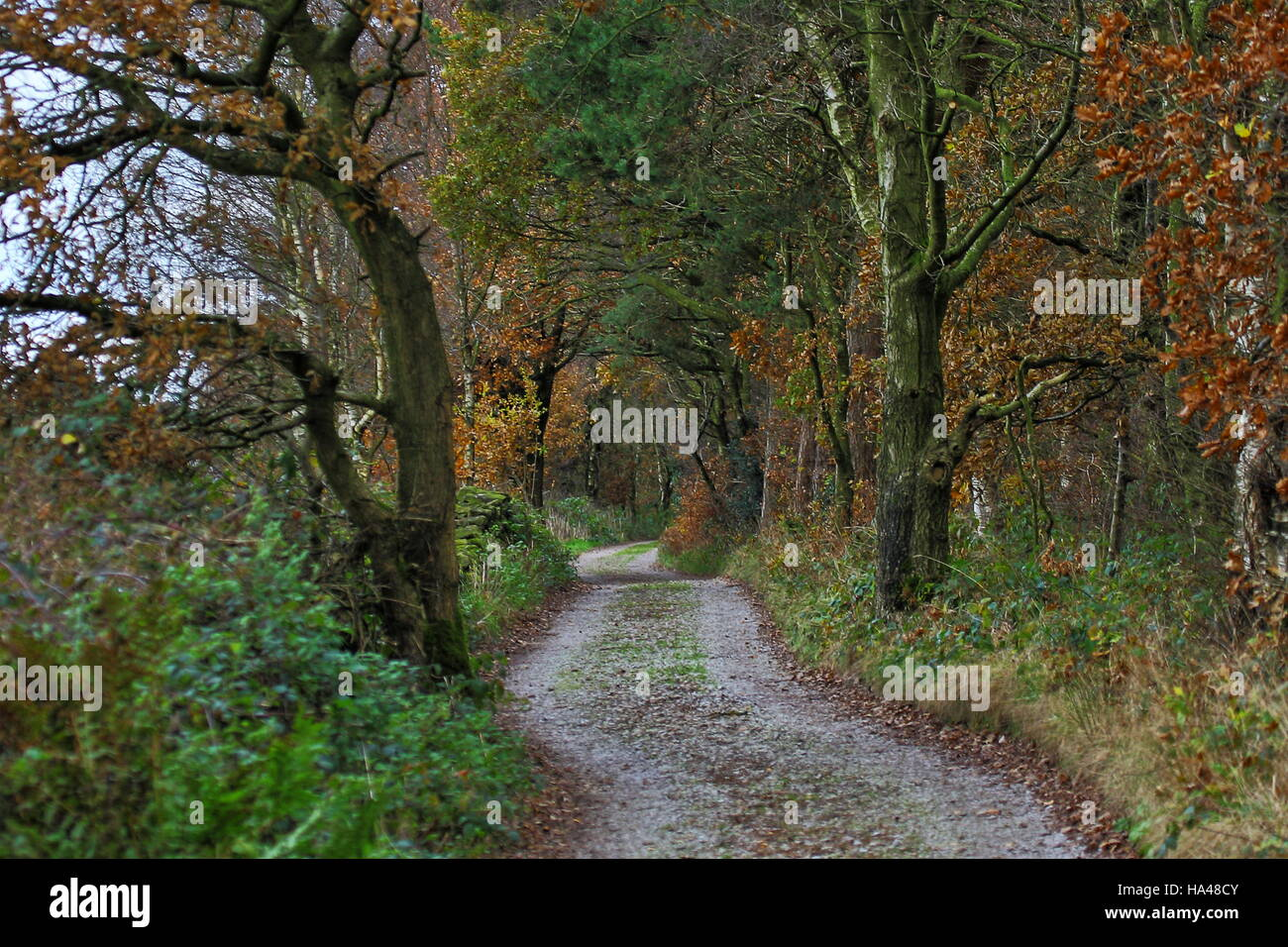 A country lane above  Knypersley, Staffordshire, UK Stock Photo