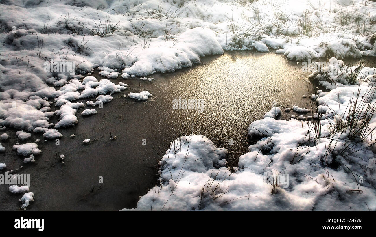 artistic picture of a frozen puddle in the forest - Stock Image