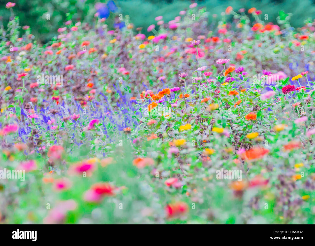 wild flowers creating a sea of color - Stock Image