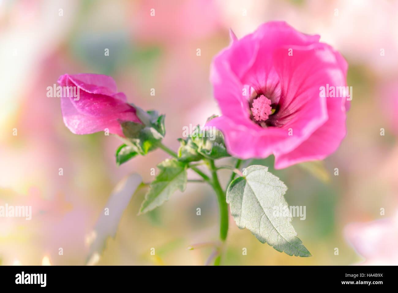 beautifgul garden flowers - Stock Image