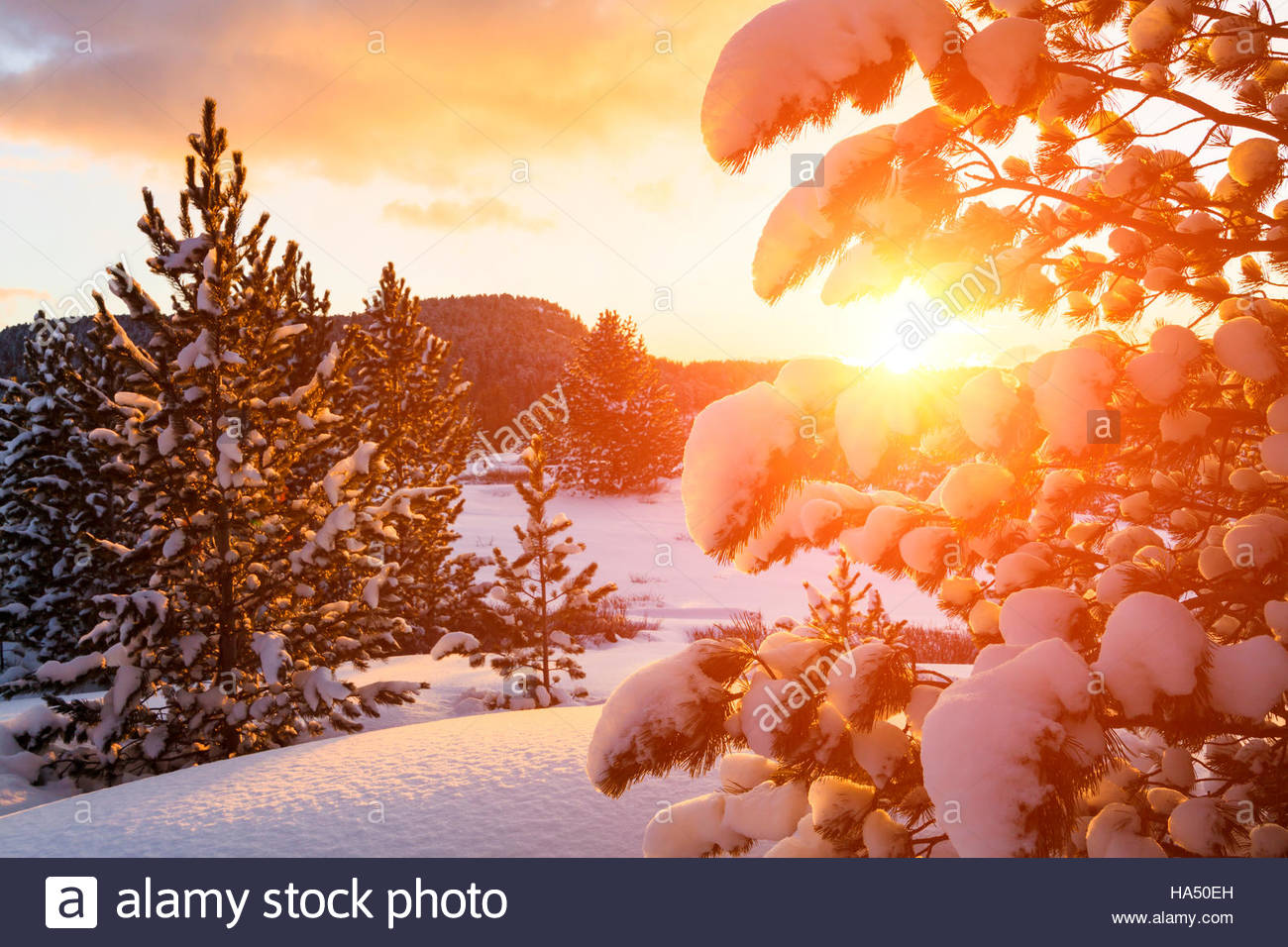 Winter forest at sunset - Stock Image