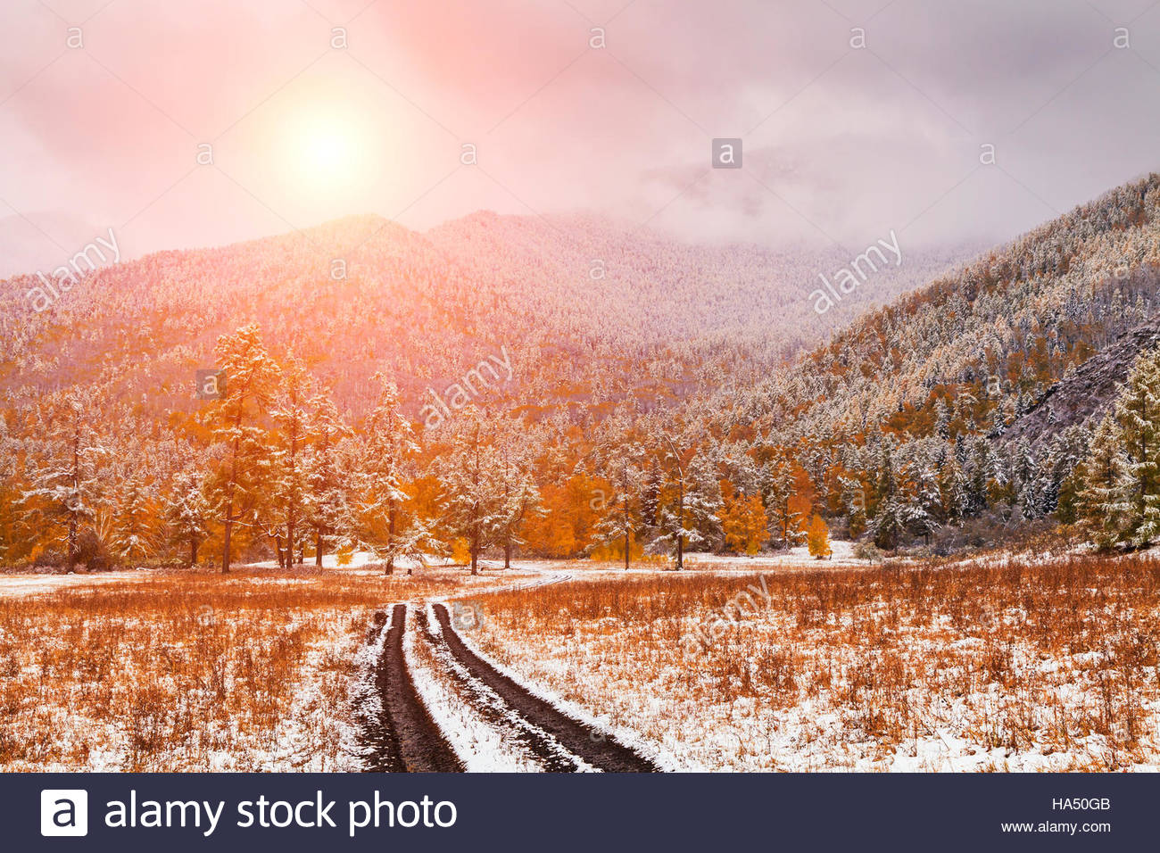 Winter forest in the mountains Stock Photo